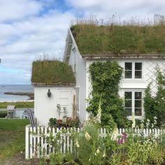 """90 likerklikk, 14 kommentarer – Marit (@mamienna) på Instagram: """"På utsiden - havet med Nordpolen. På innsiden -Frodig blomsterglede  #bleik #andøya #bestofnorway…"""""""