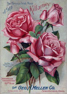 Vintage Diy, Decoupage Vintage, Vintage Labels, Vintage Cards, Vintage Flowers, Garden Catalogs, Seed Catalogs, Vintage Pictures, Vintage Images