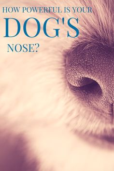 Did you know dogs smell separately with each nostril to determine the location of the smell?  Find out just how powerful your dog's nose is!