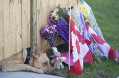 """Cpl. Nathan Cirillo referred to his dogs as his """"family."""" On Thursday, the pets of the Canadian reservist, who was shot dead in Ottawa the day before, were photographed at his Hamilton home, waiting in vain for their master to return, in an image similar to one Cirillo had posted to social media just two weeks earlier."""