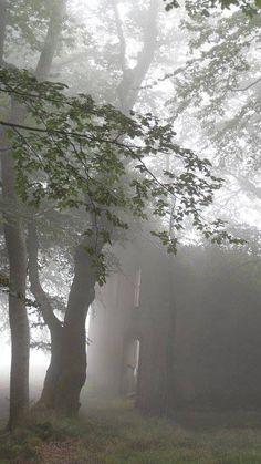 Ruïne in de mist