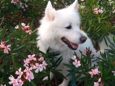 My aesthetic is dogs with flowers