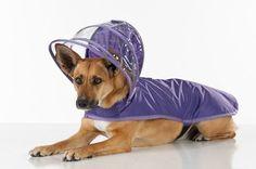 เรียนภาษาอังกฤษ ความรู้ภาษาอังกฤษ ทำอย่างไรให้เก่งอังกฤษ  Lingo Think in English!! :): Dog and Cat Rain Coats ชุดกันฝนน้องหมาน้องเเมวสุดน...