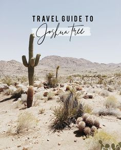 joshua tree, california - Earmark Social Bridgette S. joshua tree, california Travel Guide to Joshua Tree, California Desert Dream, Desert Life, Desert Days, In The Desert, Adventure Is Out There, The Great Outdoors, Memorial Day, Places To See, Travel Inspiration
