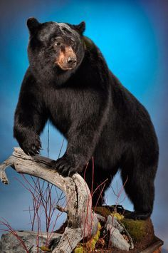 full body bear mount - Google Search