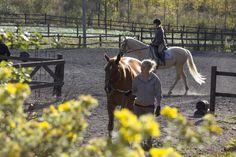 Equstom hevosia Horses, Animals, Animales, Animaux, Animal, Animais, Horse