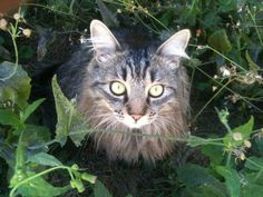 Titia volta p SP morrendo de saudades! Moshe, nossa alegria! #SemFiltro #NoFilter #cat #Gatos