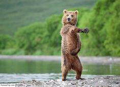 [Actualité] Il faut parfois vendre la peau de l'ours avant de l'avoir tué - Ezevel @EzEvEl77