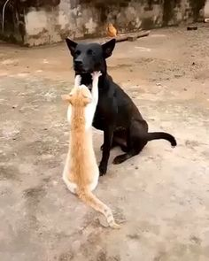 fanny cat and dog - Dogz, Catz n Othaz - Gatos Funny Animal Videos, Cute Funny Animals, Funny Animal Pictures, Funny Dogs, Cute Cats, Dog Videos, Fun Funny, Videos Funny, Animals And Pets