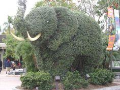 San Diago Zoo