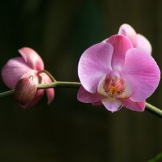 Orchid Branch Fine Art Photography