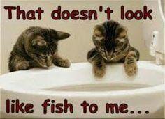 Ha ha ha ha so funny