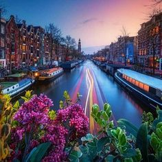 Amsterdam in spring. A colorful show in one of the most beautiful cities in the world. 📷 powered by Visit Amsterdam, Amsterdam City, Amsterdam Netherlands, Most Beautiful Cities, Beautiful World, Europe Spring, Nature Photography, Travel Photography, Amazing Sunsets