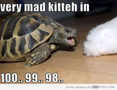 funny turtle - Google Search