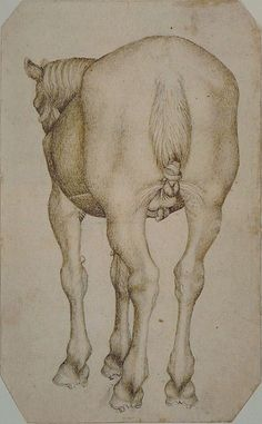 Pisanello, horse from the rear, tail in a knot, mid 15C. Codex Vallardi 2444, Louvre, Paris