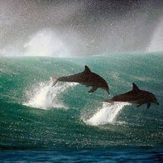 Dolphins sharing their joy of life