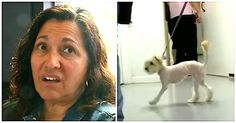 cool Couples Beloved Dog Dies, Then Mom Sees 3-Legged Pup On TV And Knows Its A Sign