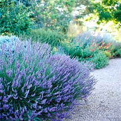 Lavender....It looks great, smells wonderful, and it's as tough as nails!