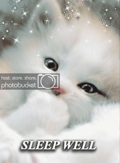 Such a very cute cat😍 Cute Kittens, Cats And Kittens, Beautiful Cats, Animals Beautiful, Cute Baby Animals, Funny Animals, Funny Cats, Good Night Greetings, Good Night Gif