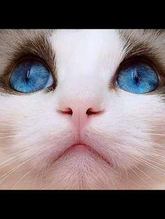#CAT##EYES##CUT##ANİMALS#