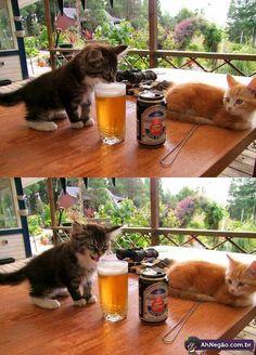 gato e cerveja!