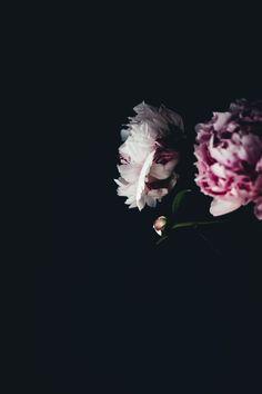 Photo by Annie Spratt | Unsplash | Unsplash