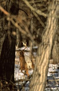 101 Tips to Deer Hunting Success