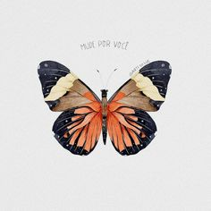 hgjuikjmnhmvghjhgj - 0 results for butterfly Aesthetic Iphone Wallpaper, Aesthetic Wallpapers, Butterfly Wallpaper Iphone, Butterfly Art, Butterflies, Photo Wall Collage, Cute Wallpapers, Art Inspo, Painting & Drawing