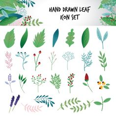 Hand drawn leaf icons set Free Vector
