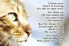 You left your paw prints in our hearts RIP SweetSoulsOfYulin Pet Loss Quotes, Cat Quotes, Animal Quotes, Cat Sayings, Prayer Quotes, Nice Sayings, Souvenir Animal, Crazy Cat Lady, Crazy Cats