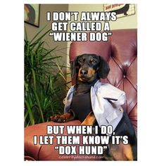 Hes the Most Interesting Dog in the World Petties Award Winner, Crusoe Celebrity Dachshund Dachshund Funny, Mini Dachshund, Daschund, Dachshund Quotes, Funny Dogs, I Love Dogs, Puppy Love, Cute Dogs, Crusoe The Celebrity Dachshund