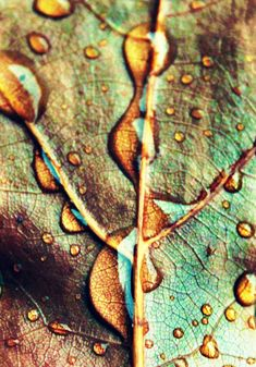 I chose this image because I think it has amazing texture. The texture of the leaf and the veins create an amazing image. The water droplets add to the texture and help create strong light and dark areas. Patterns In Nature, Textures Patterns, Leaf Patterns, Fotografia Macro, Chef D Oeuvre, Water Droplets, Natural Forms, Macro Photography, Photography Lighting