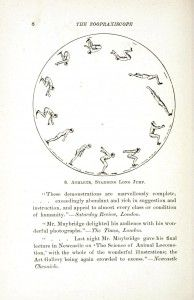 Animal - Locomotion - Zoopraxiscopy - Jumping