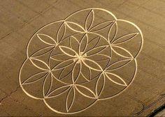 Blume des Lebens als Kornkreismuster