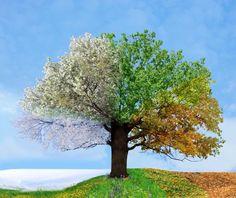 bomen seizoenen - Google zoeken
