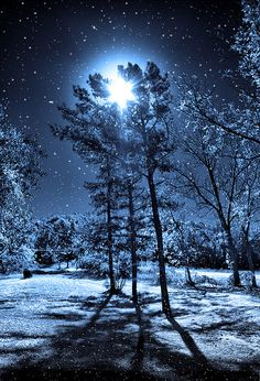 """One snowy night....."" by believer9 on Flickr - This is a beautiful photograph of a snowy night!"