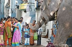 Temple elephant blessing with his trunk touch hindu people, Pondicherry, tamilnadu, India