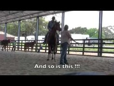 Naughty Warmblood Dressage Horse Meets Cowboy – The Transformation Is Beautiful! – The Horseaholic