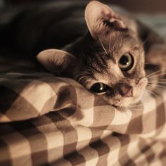 """inspiredandconnected: """" Cute cat :)   pinterest on We Heart It http://weheartit.com/entry/102383983/via/photoarts """""""