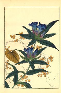 Unknown 1908  Flowers  Japan