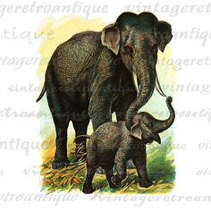 Digital Image Elephants Printable Classic Color Illustration Graphic Download Vintage Clip Art. High resolution digital graphic for fabric transfers, making prints, and more. Real printable vintage art. For personal or commercial use. This digital image is high quality, large at 8½ x 11 inches. Transparent background PNG version included.