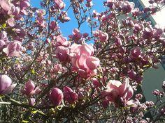 primaveral :)