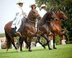 Caballos de Paso Peruanos