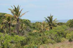 at Casa de Cocos Coco, Palm Trees, Vineyard, Villa, Environment, Africa, Sea, Holiday, Plants