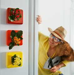 FlowerBox - Vertical flowers on your wall, nice to have #flowers #urban