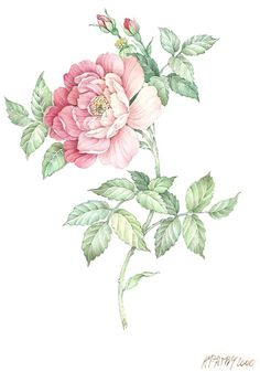 Цветочное от Anne Marie Patry-Belluteau