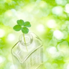 Clover in a bottle, Digital compositeのスマホ壁紙(壁紙.com) Easter Wallpaper, Wallpaper Iphone Cute, Cute Wallpapers, Photographie Macro Nature, Heart In Nature, Aesthetic Roses, Good Morning Flowers, Creative Pictures, Studio Ghibli Art
