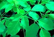 Moringa Book Some call it a miracle. Could it also be good science? Moringa Benefits, Health Benefits, Moringa Recipes, Perennial Vegetables, Florida Gardening, Cancer Cure, Growing Tree, Tree Of Life, Herb Garden