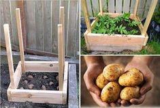 Ako vypestovať až 45 kg zemiakov na 1 m² Russian Recipes, Food Art, Planters, Potatoes, Backyard, Gardening, Vegetables, Ethnic Recipes, Flowers