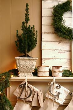Furniture and Accessories. Lovely living room Christmas mantel decoration with real live greenery dwarf blue spruces, shortleaf pine garland, and beautiful cedar wreath. Welcome Santa: Lovely Christmas Decorating Ideas For Fireplace Mantels Live Christmas Trees, Christmas Fireplace, Christmas Mantels, Christmas Love, Country Christmas, All Things Christmas, Winter Christmas, Christmas Stockings, Christmas Decorations
